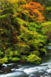 Herbstliche-klamm