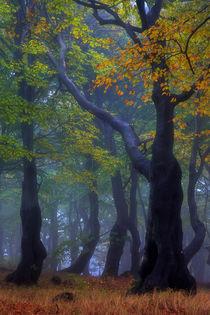 gespenstisch schöner Herbst by moqui