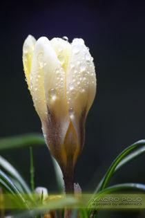 Primavera - Frühling - Spring von etcetera23
