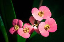 Kleinen Blüten von Andreas Brauner