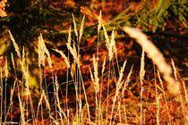 ~ Grasses on the Forest Edge ~ von Sandra  Vollmann