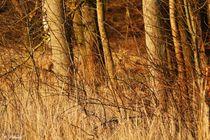 ~ Soft Natural Colors Brown ~ von Sandra  Vollmann