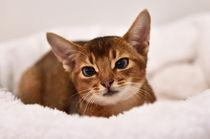 D4k-3662-dot-abi-kitten1-01-16