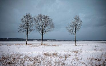 Michal-kabzinski-012-threetrees