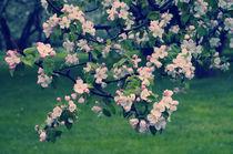 Blossoming Spring Garden von cinema4design