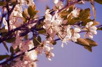 Blossom-9