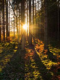 Die ersten Sonnenstrahlen. . . by dani-ja