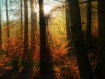 Zauber der Natur by dani-ja