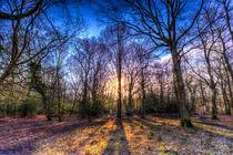 The Morning Sun Forest by David Pyatt