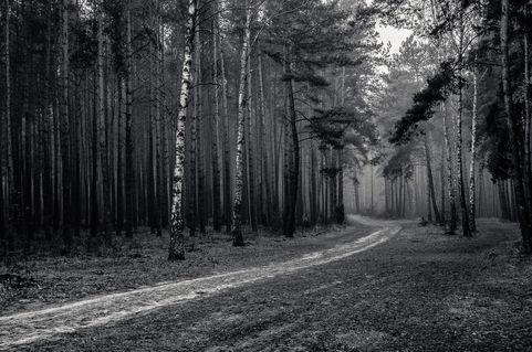 Michal-kabzinski-013-in-the-forest