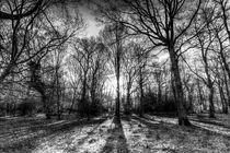 The Monochrome Sun Ray Forest by David Pyatt