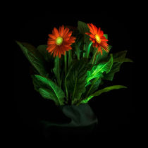 Glowing Gerbera 7073 by Mario Fichtner