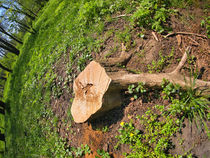 Stump of the cut tree on the edge of the forest by Vladislav Romensky