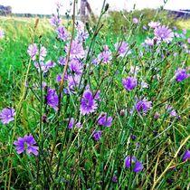 Blumenfeld von Ivy Müller