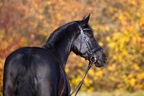 Schwarzes Pferd by anja-juli