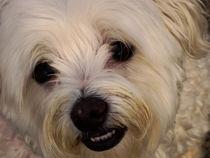 NICE DOGGY von Maks Erlikh