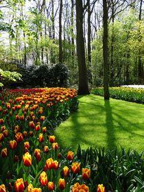 Es ist Frühling! von anowi