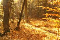 Goldener Herbst by darlya