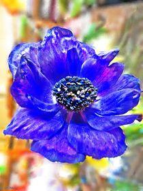 ~ Anemone Blue 2 ~ by Sandra  Vollmann