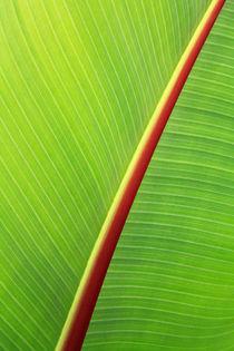 Bananenblatt von EinWinkel Photography