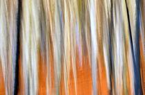 - Herbstwald - von gugigei