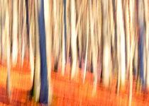 - Herbstwald - II von gugigei