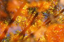 Autumn colors by Gaspar Avila