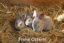 Frohe Ostern! by Anja  Bagunk