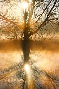 Der Baum in der Morgensonne von Bernhard Kaiser