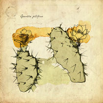 Opuntia Pilifera by mare