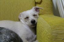 I sleep anywhere by Mario J. Maia