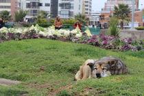 My life dog von Mario J. Maia