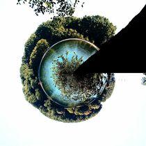 Baum by Ivy Müller