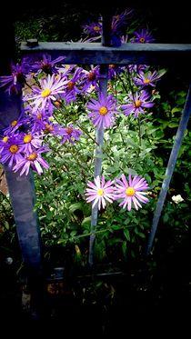 Spring von Ivy Müller