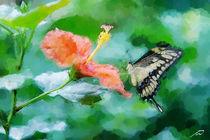 Papilio-cresphontes-23067-fotosketcher-neue-groesse