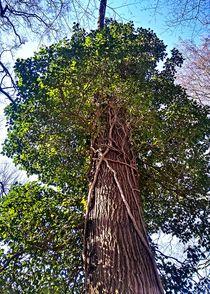 Baum Parasit von Martina Lender-Frase