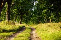 Waldweg auf Usedom von ir-md