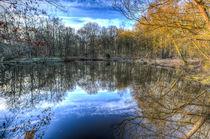 Early morning Forest Pond von David Pyatt