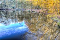 Peaceful Pond Reflections  von David Pyatt