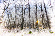 Sunrise Snow Forest Art by David Pyatt