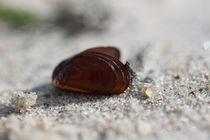 Klein aber fein...   am Strand by Simone Marsig