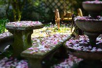 eden flower by emanuele molinari