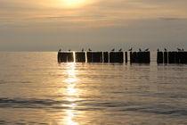 Sonnenuntergang auf Rügen in Dranske von Simone Marsig