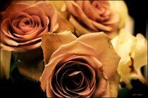 ~ Aparte Farbe Rosen ~ von Sandra  Vollmann