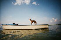 Der alte Hund und der See von Corrinska Holzner
