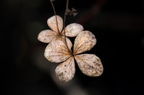 Trockenesblatt