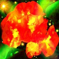 Die Rosen von tawin-qm