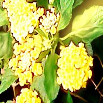 Die Gelbe by tawin-qm
