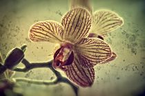 Little orchid von leddermann