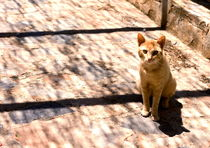 Spanish Cat 4 by Lucja Lipinska
